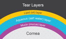 Tear Layers Diagram